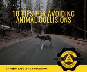 Deer Crossing Road 10 Tips for Avoiding Animal Collisions